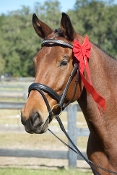 Albion KB Competition Crank Flash Snaffle Bridle